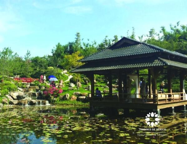 Una vista al jardín japonés, uno de los actractivos naturales que se encuentran dentro del parque.