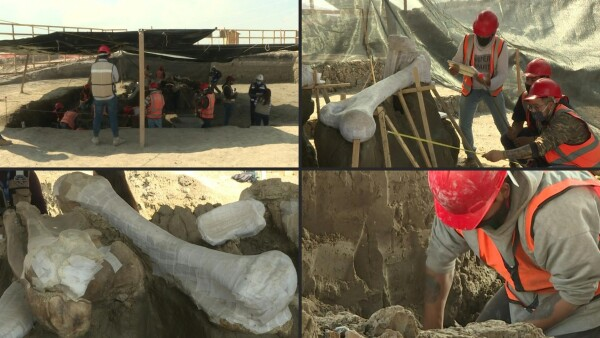Esqueletos de mamuts quedan al descubierto durante construcción de aeropuerto en México
