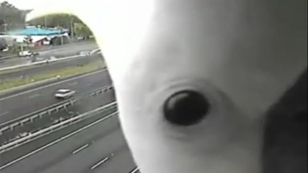 #LaImagenDelDía: una cacatúa hace 'photobomb' en una cámara de tráfico en Austra