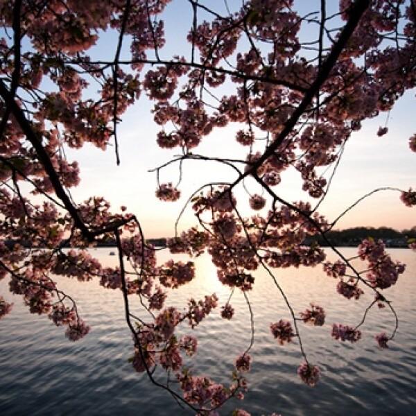irpt-flores1