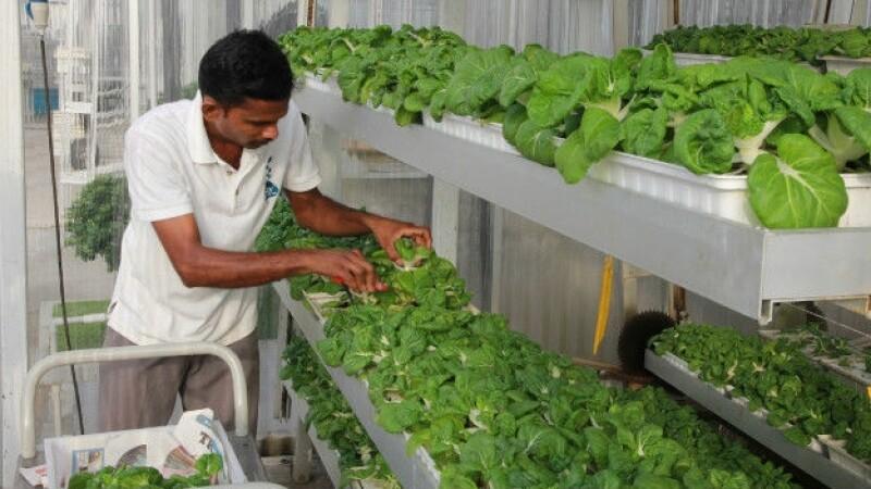 plantas, granjas, urbanas, planeta cnn