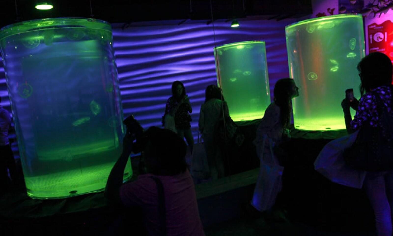 Bajo el concepto 'edutainment' -educación más entretenimiento-, el lugar ofrecerá tocar y alimentar diferentes especies como estrellas de mar y rayas.