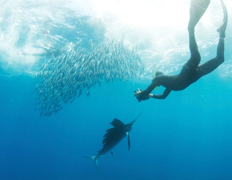 Empezaron a documentar las especies del mar como un hobby y hoy es un proyecto consolidado.