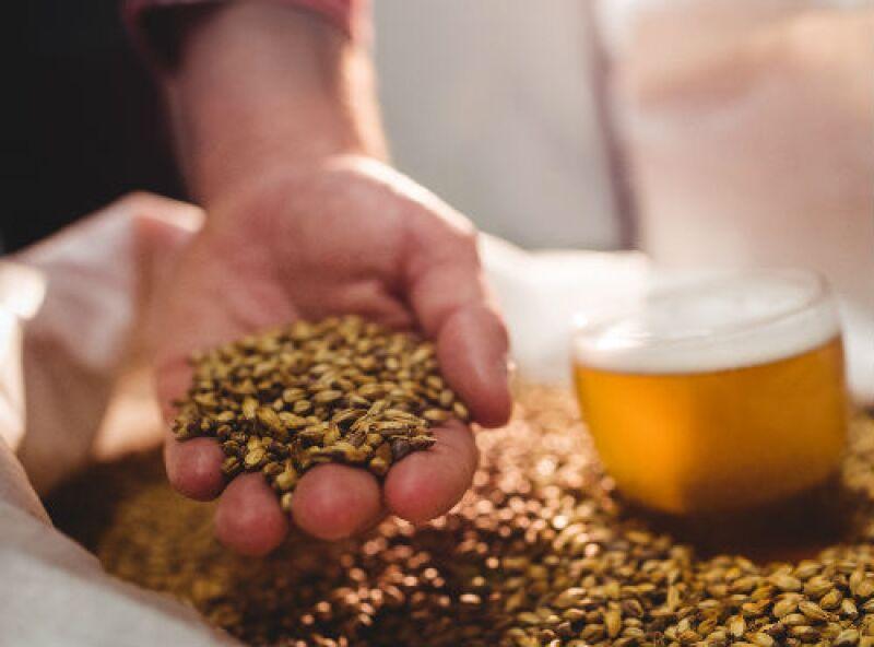 cerveza y granos