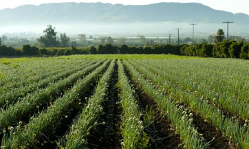 El objetivo de FIRA es otorgar crédito, garantías, capacitación, asistencia técnica y transferencia de tecnología a los sectores agropecuario, rural y pesquero del país. (Foto: Getty Images)