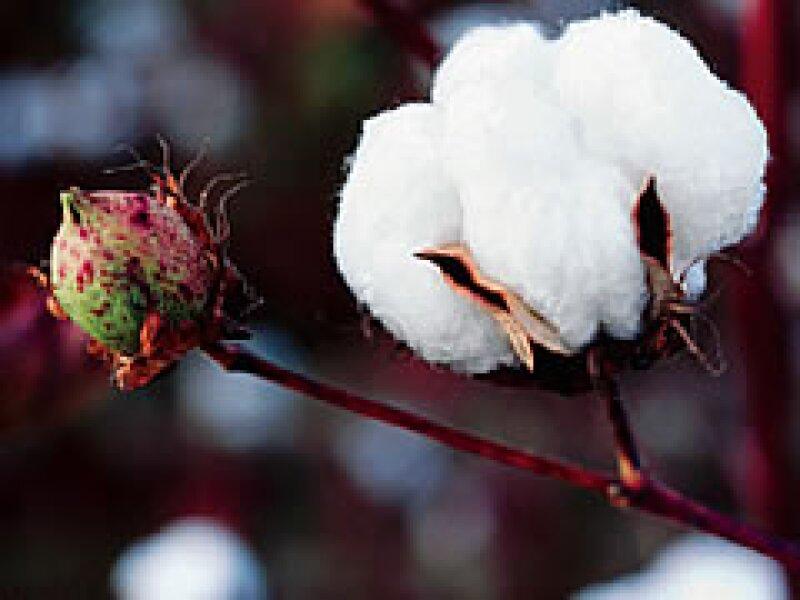 Gap rastrea el origen del algodón del que están hechas sus prendas. (Foto: Especial)
