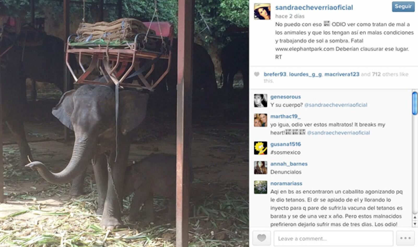 Sandra mostró su disgusto por el maltrato de animales, y a través de sus redes sociales, pidió que por medio de retuits, ayudaran a la exposición y cancelación del Elephant Park.