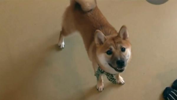 Este café en Tokio ofrece la dulce compañía de 12 perritos