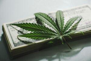 180822 marihuana is Yarygin.jpg