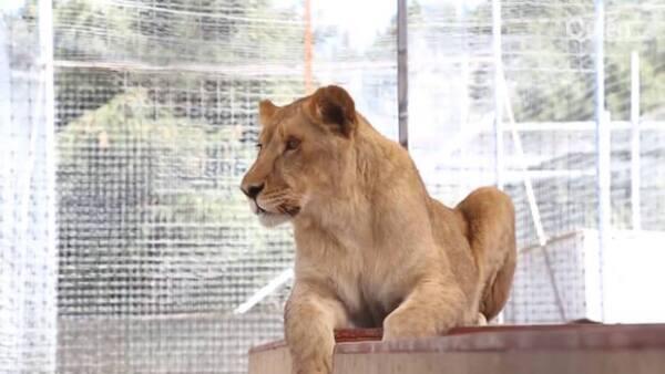 So cute! Visitamos la fundación Black Jaguar White Tiger y nos dejamos enamorar por los tigres y leones del lugar.