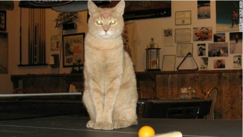 gato alcalde
