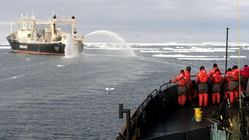 sea sheperd caza ballenas