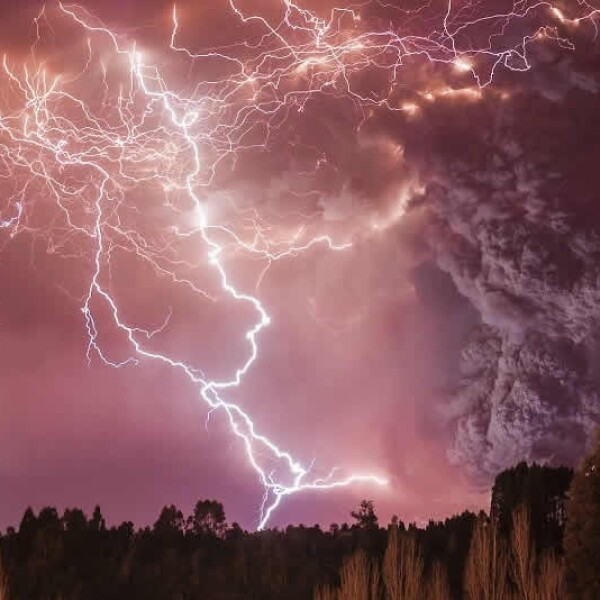tormenta premio wildlife photographer