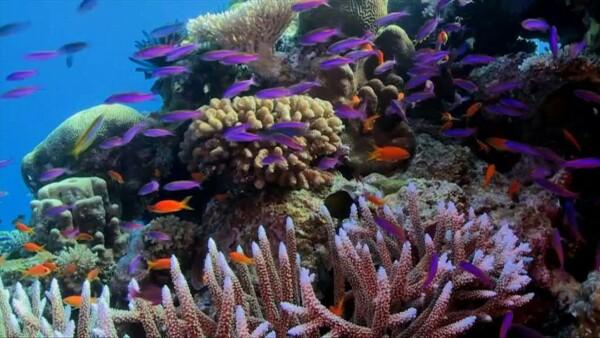 Australia dice que el estado de la Gran Barrera del Coral va de malo a muy malo