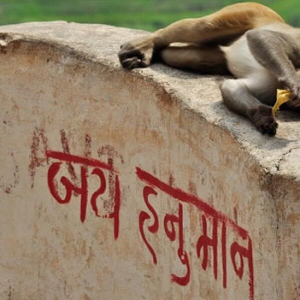 irpt-india6