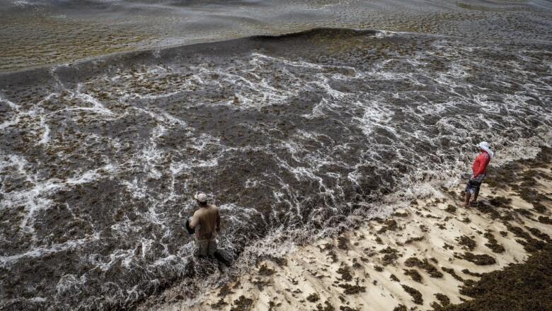 Sargazo Playas