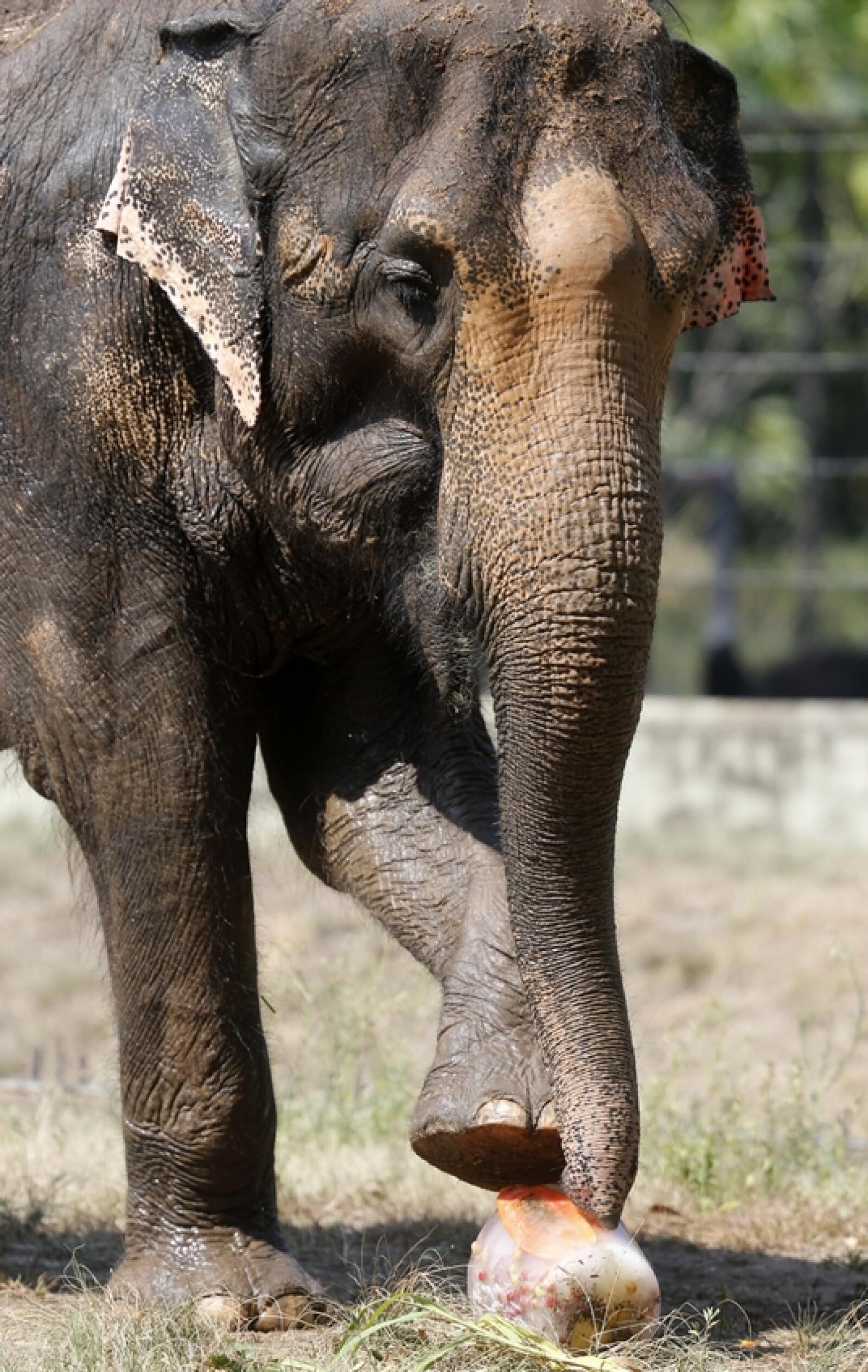 elefante calor rio