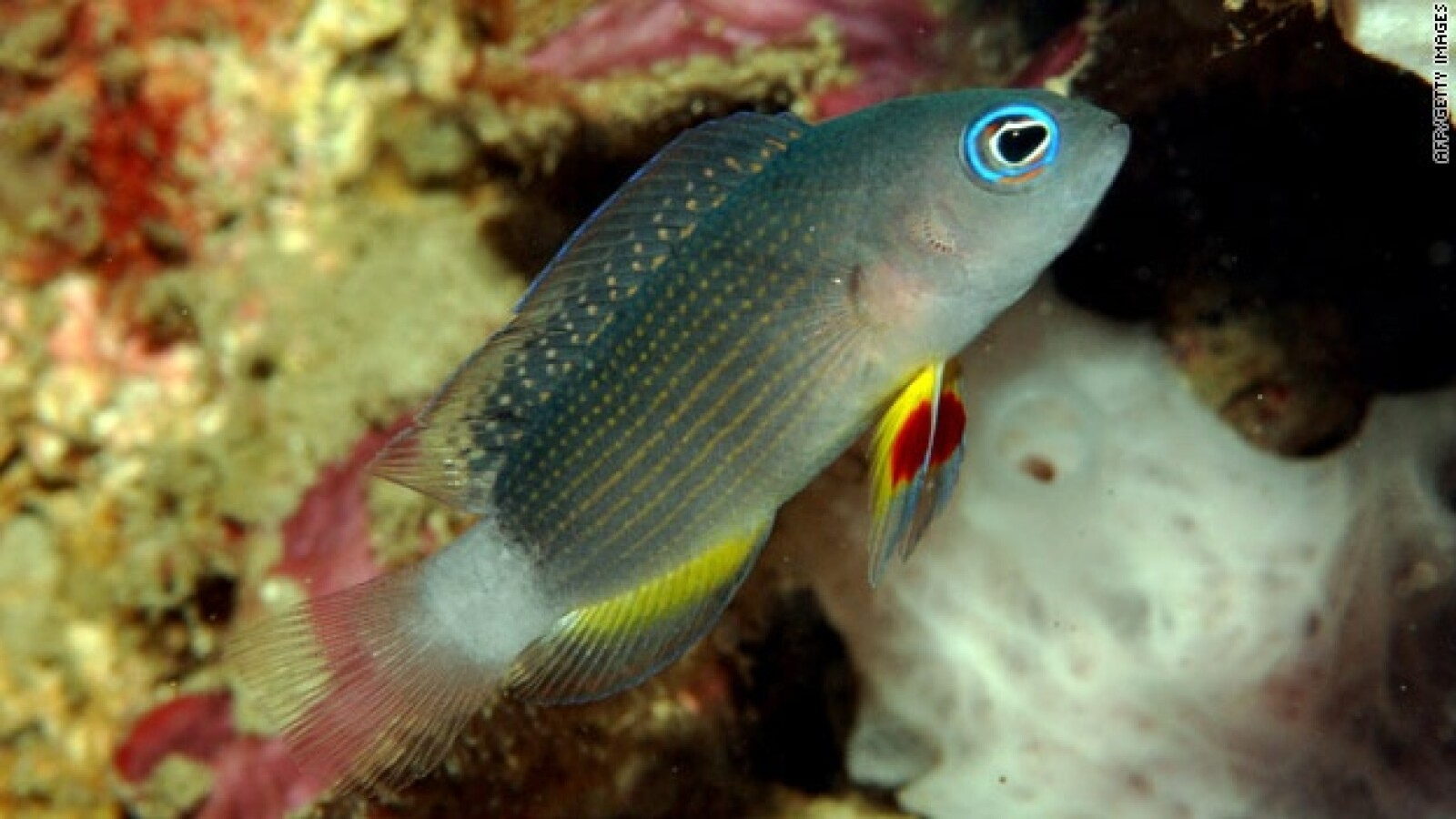 Bali, peces, pez, biodiversidad, nuevas especies