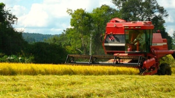 producion-de-arroz