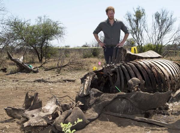 Harry y cadáver de rinoceronte 2015