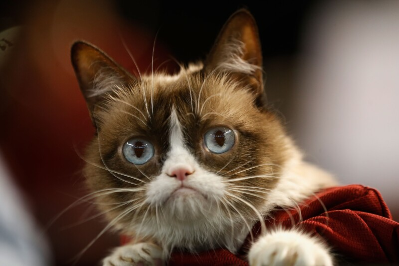 Internet net star Grumpy Cat dies at age of seven
