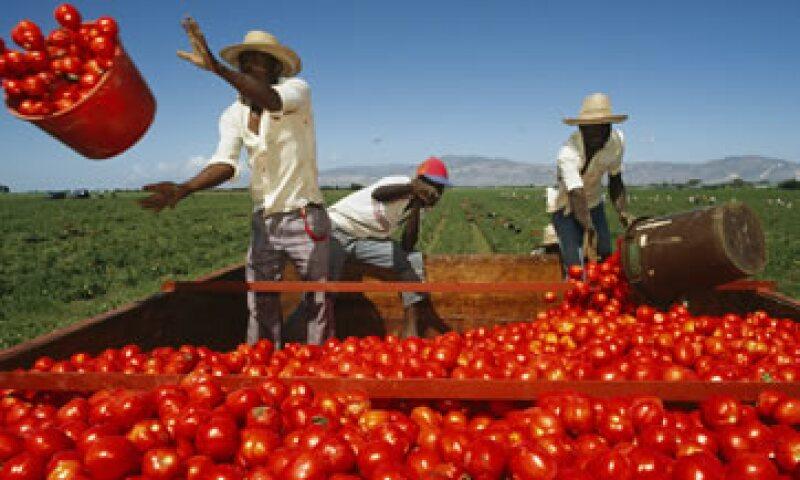 El tomate es el principal producto agropecuario que México exporta a EU. (Foto: Getty Images)