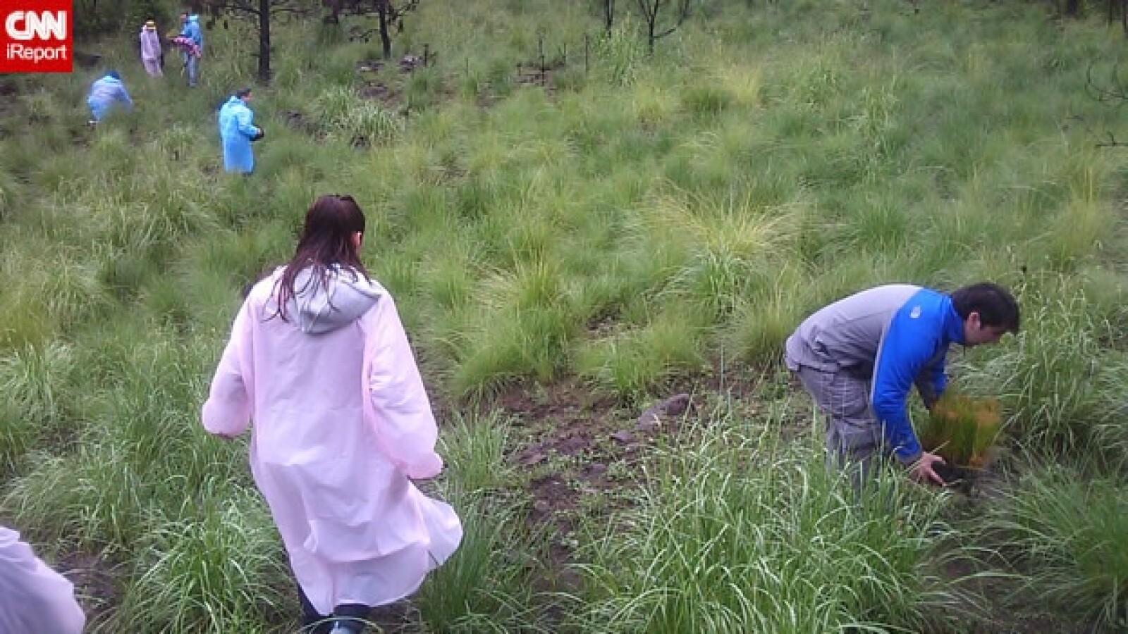 irpt-reforestacion4
