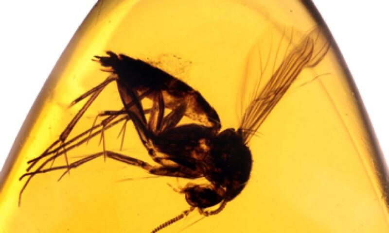 El ámbar permite preservar, como ningún otro medio, a los organismos. (Foto: Getty Images)