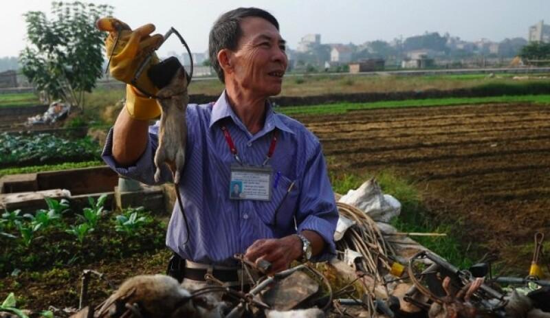 ratas vietnam cocina