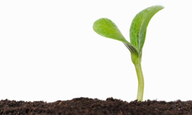 Los científicos británicos construyen un sistema que copie la fotosíntesis de las plantas.  (Foto: Getty Images)