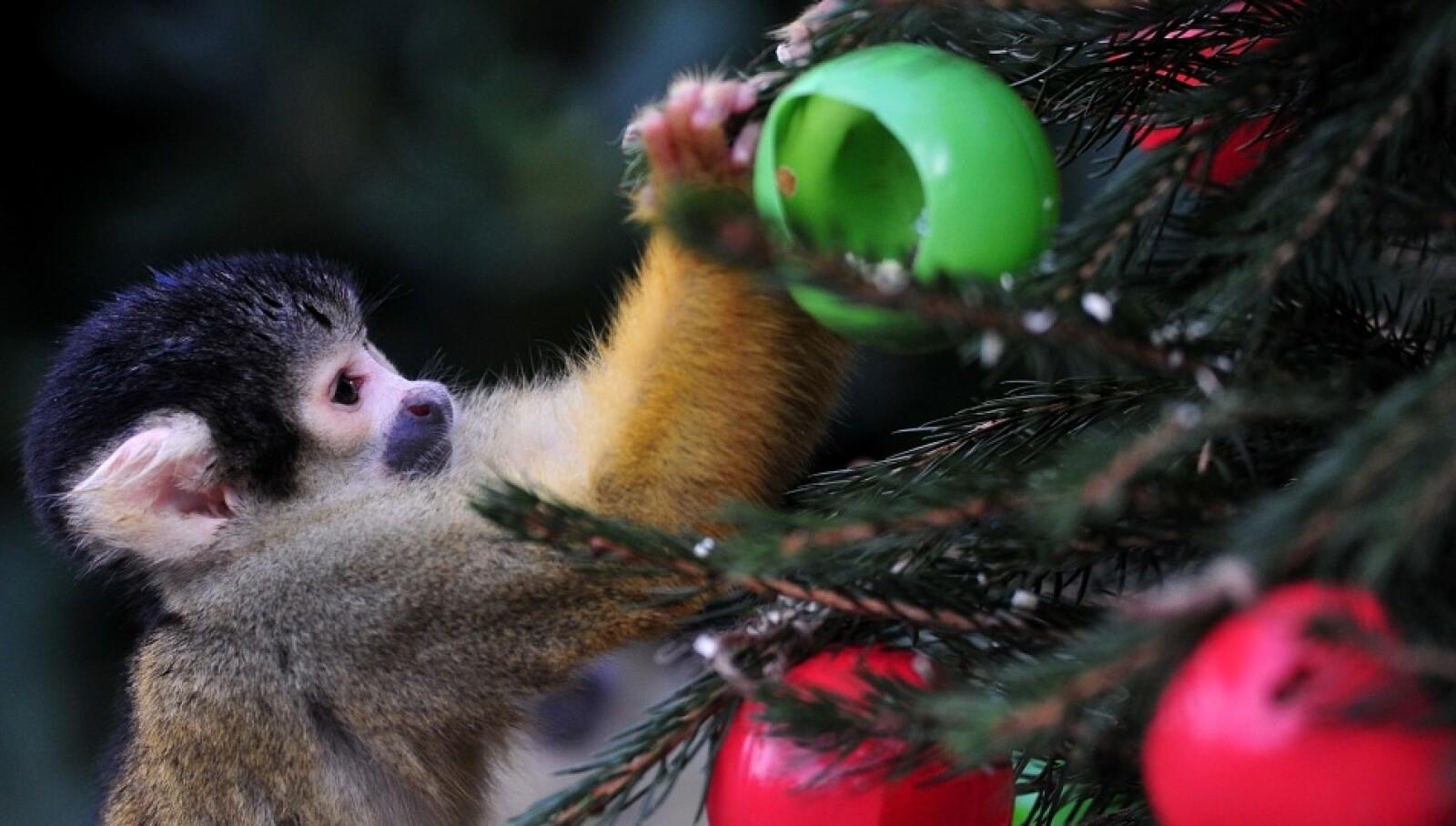 Animales-Navidad-3-AFP