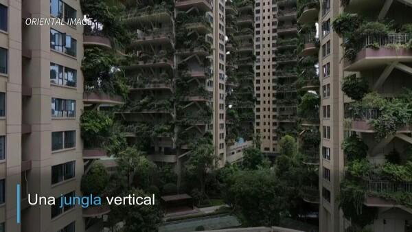 Esta vivienda ecológica se salió de control y fue invadida de plantas y moscos