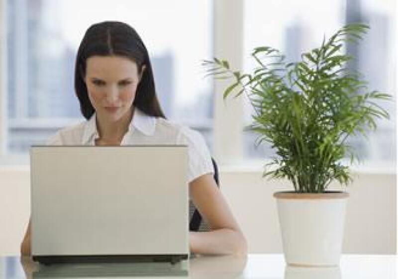 computadora oficina planta verde empleo