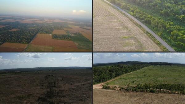 La deforestación en la Amazonía brasileña alcanza récord en el 2020
