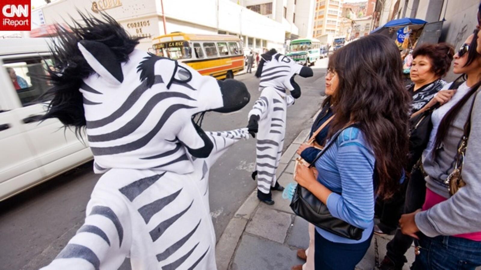 irpt-zebra-bol3