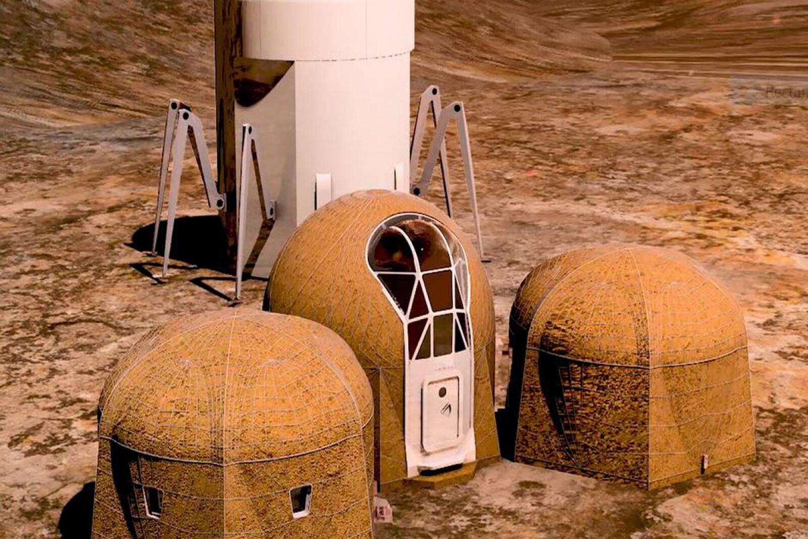 Zopherus - casa - astronautas