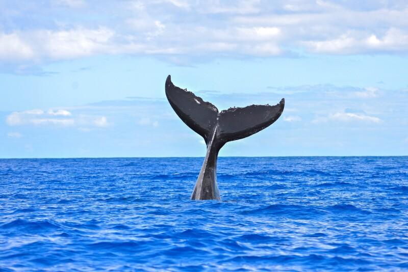 No es poco común encontrar diferentes tipos de ballenas. (Foto: Stock.xchng)