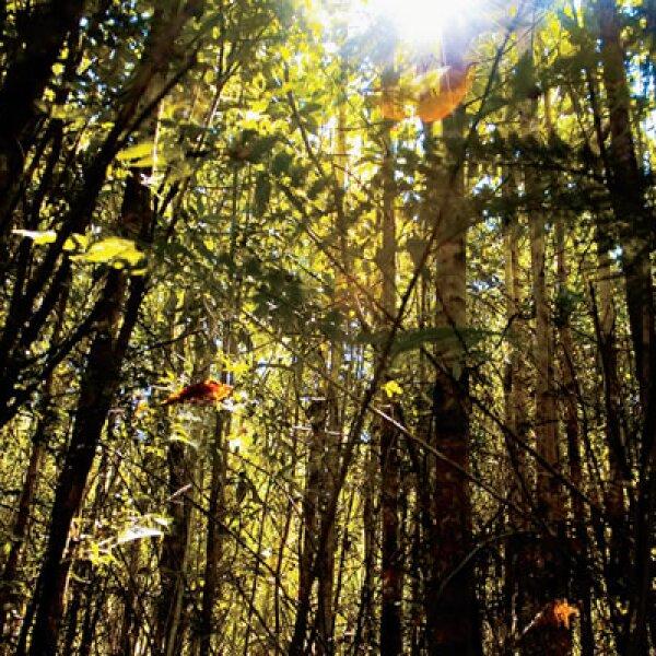 El parque Pumalín es una reserva de 320,000 hectáreas de bosque ideales para una caminata y aprender sobre botánica, más tarde acampar o rentar una cabaña de lujo.