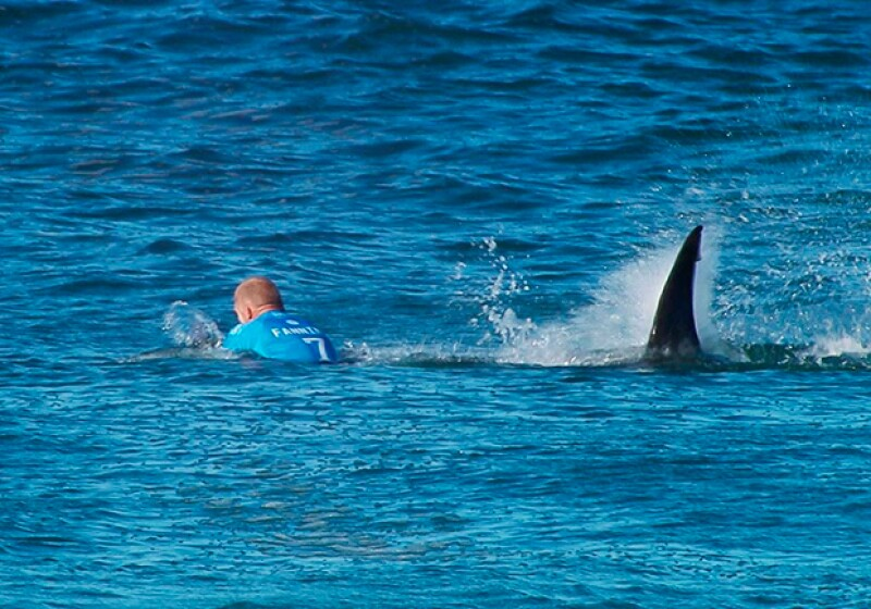 Este domingo, el surfista Mick Fanning sobrevivió al ataque de dos tiburones durante la prueba el torneo JBay Open en Sudáfrica.