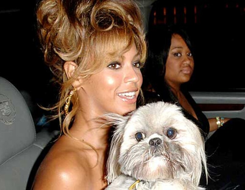 La intérprete de Single Ladies solía llevar a todas partes a su lindo perrito.