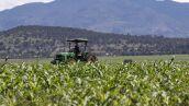 Sector agropecuario medidas espejo Estados Unidos