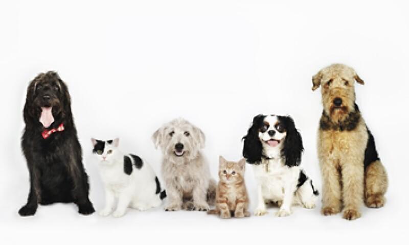 El negocio de mascotas y accesorios tiene un valor estimado de 1,000 mdd en México. (Foto: Getty Images)