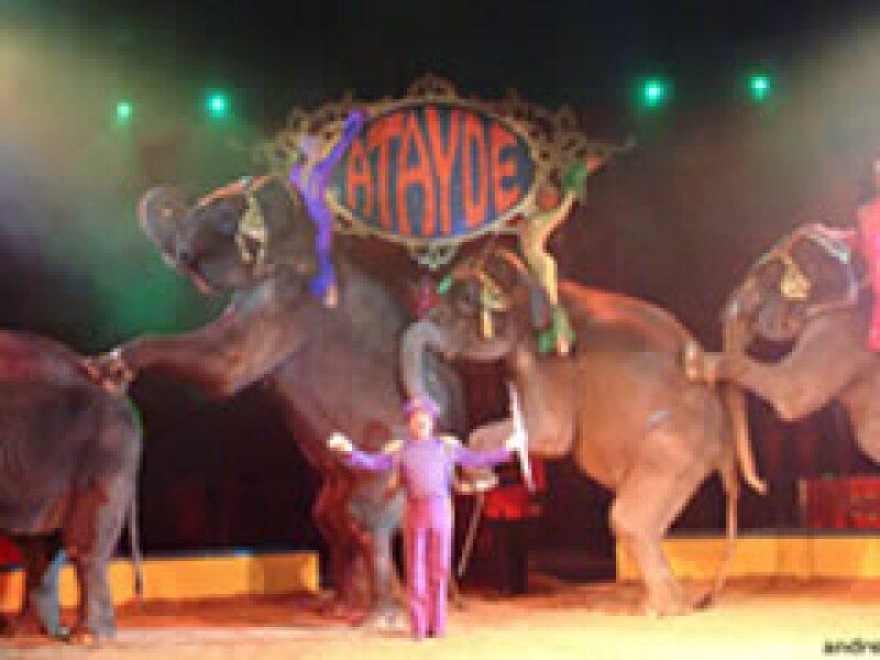 El circo es un arte vivo y en vivo, dijo Federico Serrano(Foto: Especial)