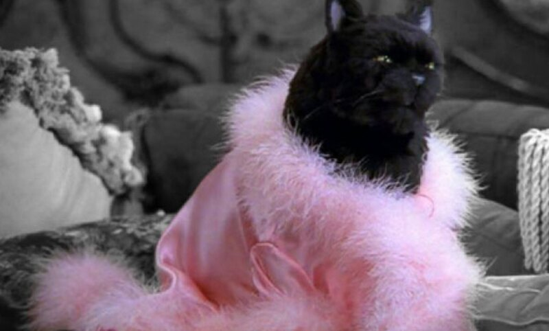 Salem-Alfrombra-Roja-Netflix