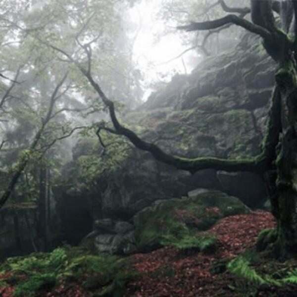 El Bosque del Alto Palatinado, Alemania
