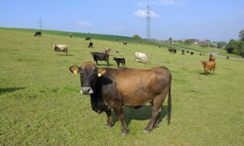 La ganadería ha sido una de las actividades económicas distintivas de Coahuila. (Foto: Photos to Go)