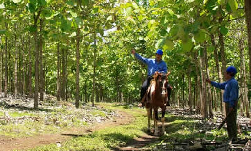 Proteak Uno está certificada como el sistema más robusto a nivel mundial para el aseguramiento de prácticas forestales sustentables. (Foto: Cortesía Proteak Uno)