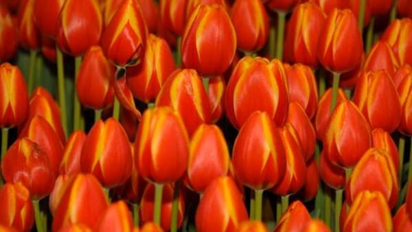 flor flores flower