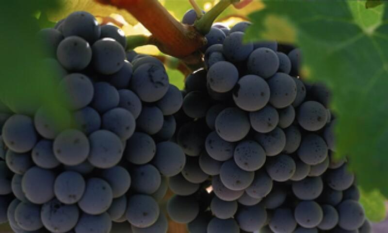 Ofrecer vinos con sabores afrutados ha sido parte de la estrategia de Monte Xanic. (Foto: Cortesía Monte Xanic)