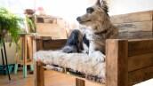 Esta microempresa de muebles para mascotas consiguió más de 27,000 pesos de amigos, familiares y extraños.